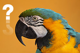 ft parrot